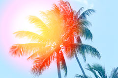 Retro photo of a beautiful of palm trees Stock Image