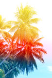Retro photo of a beautiful of palm trees Royalty Free Stock Photo