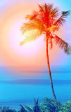 Retro photo of a beautiful of palm trees Royalty Free Stock Images