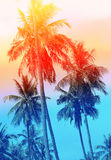 Retro photo of a beautiful of palm trees Royalty Free Stock Photography