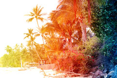 Retro photo of a beautiful watercolor of palm trees Stock Images