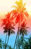 Retro photo of palm trees Stock Photo