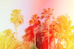 Retro photo of palm trees Royalty Free Stock Photos