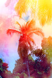 Retro photo of palm trees Royalty Free Stock Image