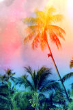 Retro photo of palm trees Royalty Free Stock Image