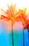 Retro photo of palm trees Royalty Free Stock Images