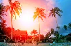 Retro photo of palm trees Royalty Free Stock Photos