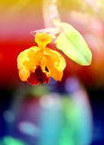 Retro photo of yellow orchids Stock Photography