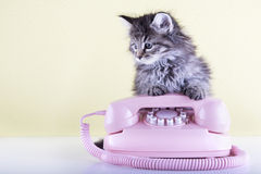 Retro pink rotary telephone and furry kitten Royalty Free Stock Images