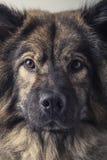 Retro portret Royalty-vrije Stock Afbeeldingen