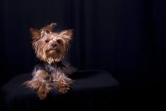 Retro portret Royalty-vrije Stock Foto's