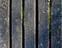 Retro porysowany drewno, drewniana tekstura, wzór z mech Obrazy Royalty Free