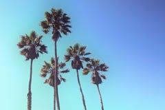 Retro projektujący oddolny widok drzewka palmowe przeciw niebieskiemu niebu zdjęcia royalty free