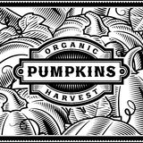 Retro Pumpkin Harvest Label Black And White Royalty Free Stock Photos