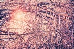Retro rami coperti di ghiaccio Fotografia Stock Libera da Diritti