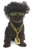 Retro- Regenbogen-Sonnenbrille und Goldkette auf Pudel Lizenzfreies Stockbild