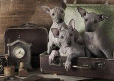 Retro ritratto disegnato dei cuccioli Immagini Stock
