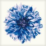 Retro rocznika stylu Błękitny Chabrowy kwiat Odizolowywający Obrazy Royalty Free