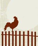 Retro rooster card Stock Photos