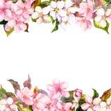 Retro- rosa Blumen - Apfel, Kirschblüte Blumenrahmen für Grußkarte Aquarell Stockfoto