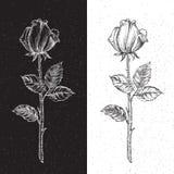 Retro rose Immagini Stock