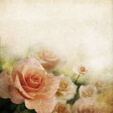 Retro rose background Royalty Free Stock Images
