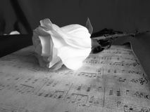 Retro rose black in white. The rose on the background notes black-and-white photograph stock images