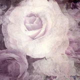 Retro rose on paper texture background Royalty Free Stock Photos