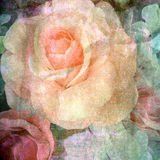 Retro rose on paper texture background Stock Image