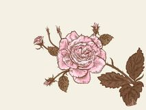 Retro roses Royalty Free Stock Images