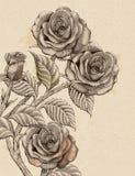 Retro roses decorative elements Royalty Free Stock Photos