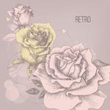 Retro roses Royalty Free Stock Photos