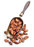 Retro scoop with cocoa beans Royalty Free Stock Photography