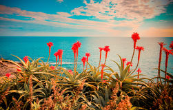 Retro seascape with flowers. Royalty Free Stock Photos
