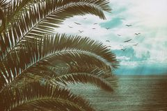 Retro seascape with palm leaves, birds and sun rays. Vintage texture with dust and scratches. Royalty Free Stock Images