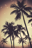 Retro Sepia Palm Trees. Retro Filtered Sepia Tropical Palm Trees Royalty Free Stock Photos