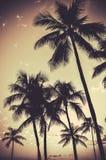 Retro Sepiapalmträd royaltyfria foton