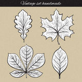 Retro set of 4 leaf sketch handmade. Vintage leaves Stock Photos