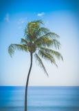 Retro Single Palm Tree In Hawaii. Retro Filtered Single Palm Tree By The Ocean In Hawaii Royalty Free Stock Photos