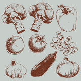 Retro sketch vegetables pattern. Brown texture wrapping paper of food or vegetables Stock Photo