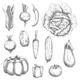 Retro sketches of garden vegetables Royalty Free Stock Photo