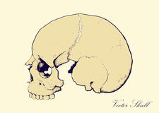 Retro Skull Profile Royalty Free Stock Image