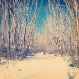 Retro Snow Trees Royalty Free Stock Photography