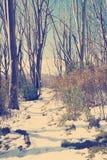 Retro Snow Trees Stock Images
