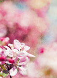 Retro spring background with flowers. Retro spring background with pink flowers Royalty Free Stock Image