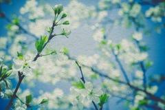 Retro Spring Blooming Trees Royalty Free Stock Photos