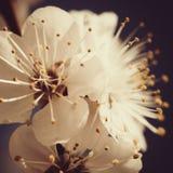 Retro stijl abstracte bloemenachtergronden Stock Foto's