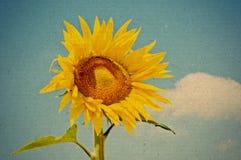 Retro stijlbeeld van zonnebloem Stock Foto