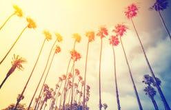 Retro- stilisierte Palmen bei Sonnenuntergang stockfotos