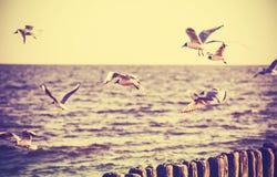 Retro- stilisiertes Foto der Weinlese von Vögeln auf dem Meer Stockbilder